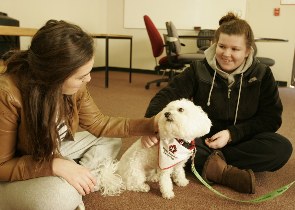 Buddy the therapy dog was one of eight canines on campus Wednesday to help students de-stress in a puppy room during exams.