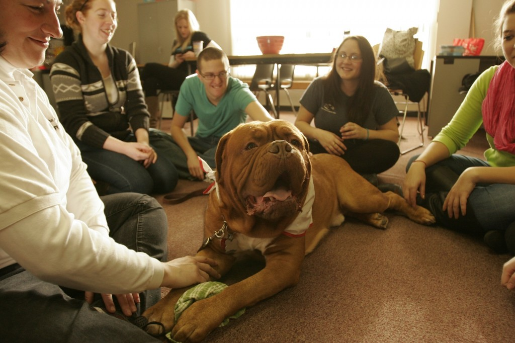 Kruz, a four-year-old French Mastiff, hams it up for students in the puppy room.