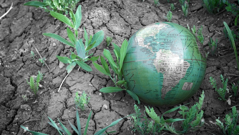 A globe in a dry field with small plants growing around it.