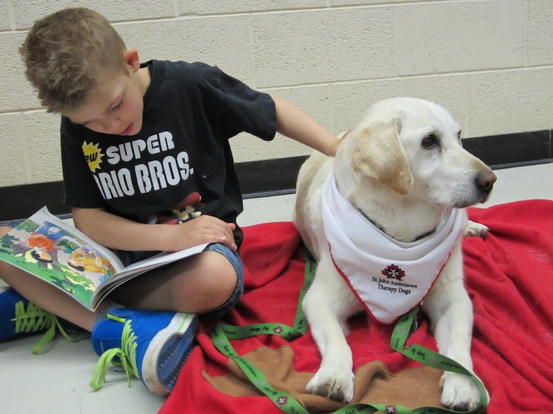 A boy reads to a St. John Ambulance therapy dog.