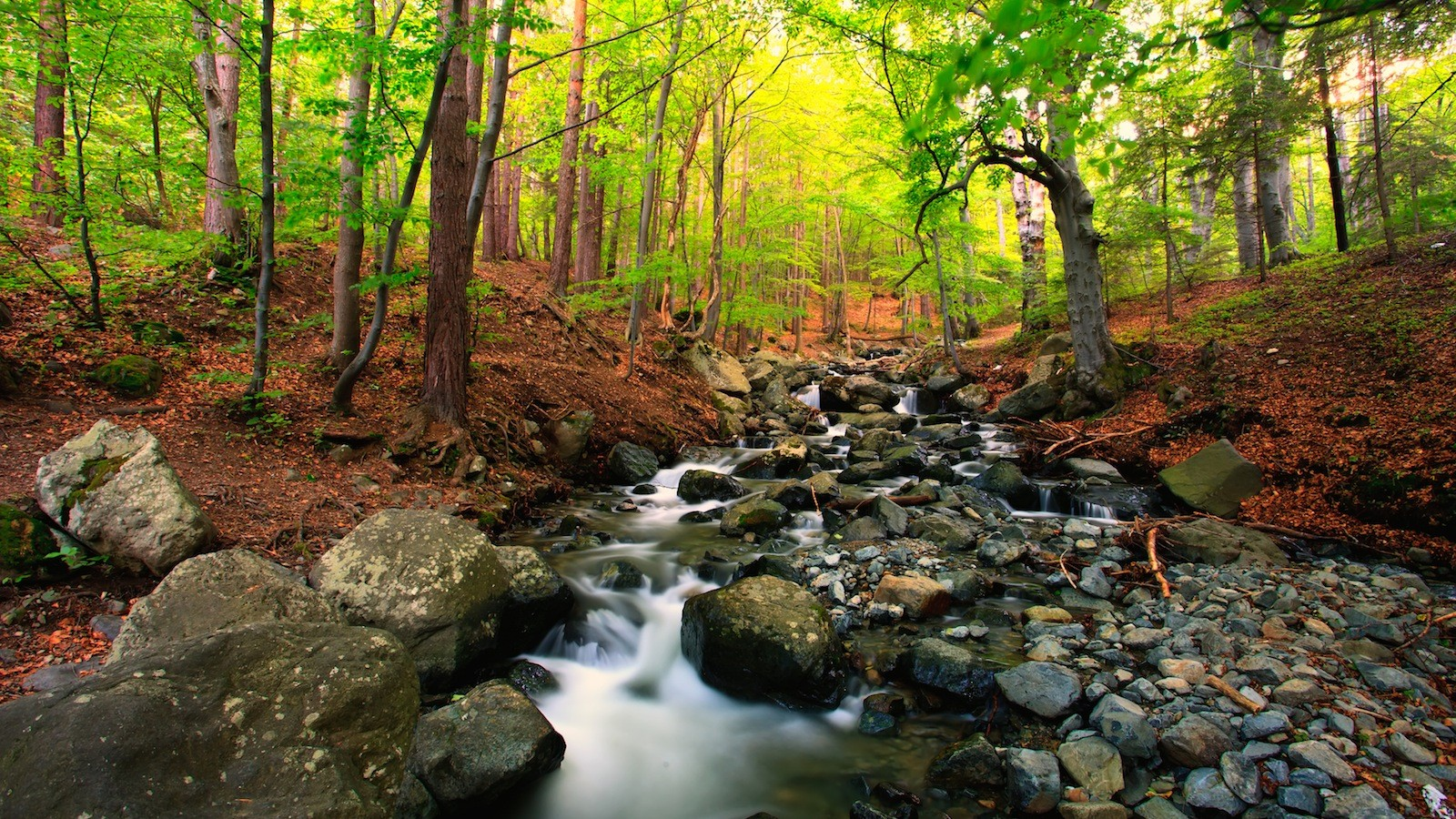 research points to importance of tree cover for stream life the