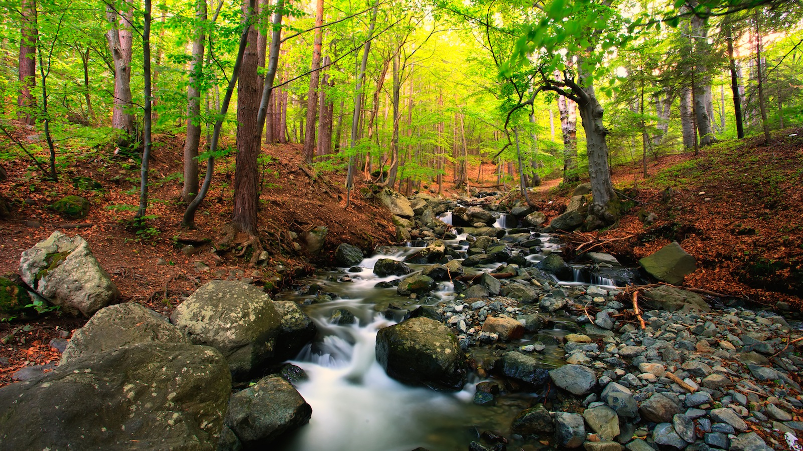 research points to importance of tree cover for stream life the brock news. Black Bedroom Furniture Sets. Home Design Ideas