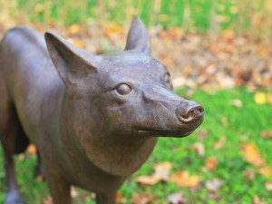 A bronze coyote is part of an art installation at Rodman Hall.