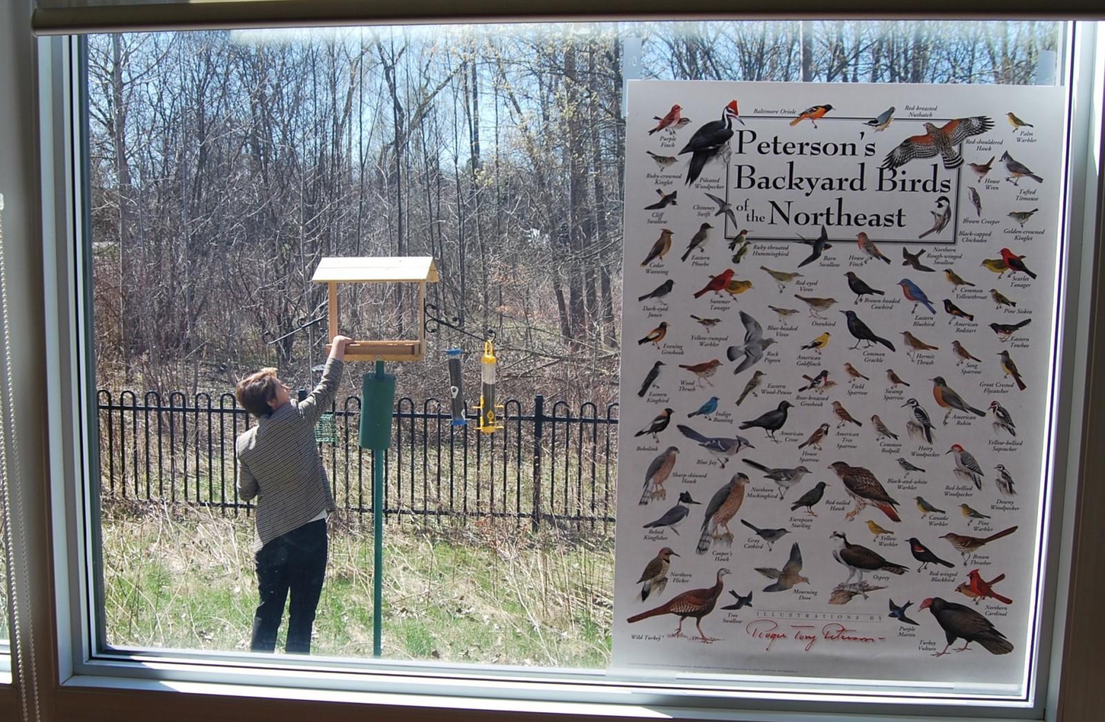 A researcher filling a bird feeder
