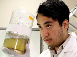 Darrell Agbulos, master's student who is working with Fiona Hunter's team studying Zika virus.