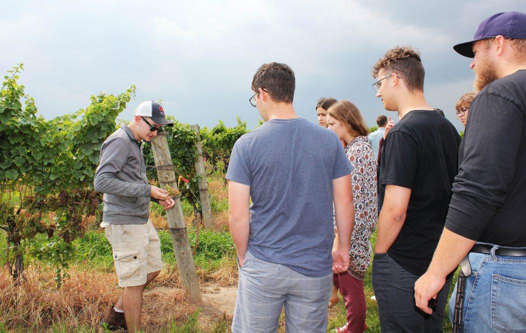 New CCOVI students at vineyard