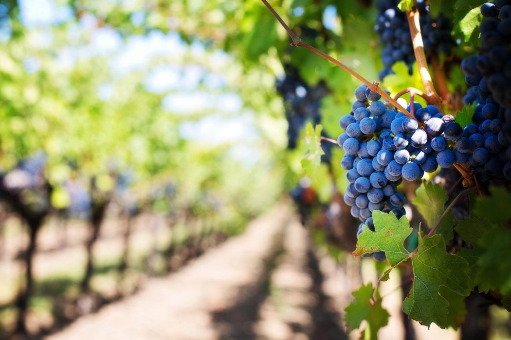 New business program expands Brock's offerings to the grape and wine industry